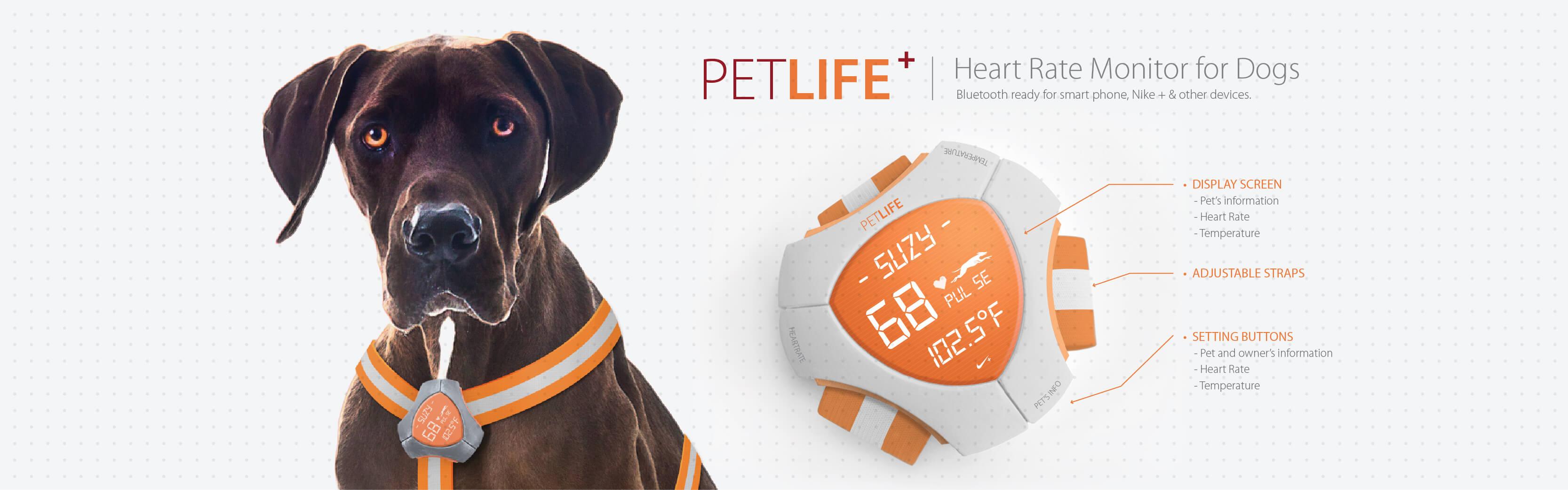 PetLife1_PetLife-Banner_1170x500