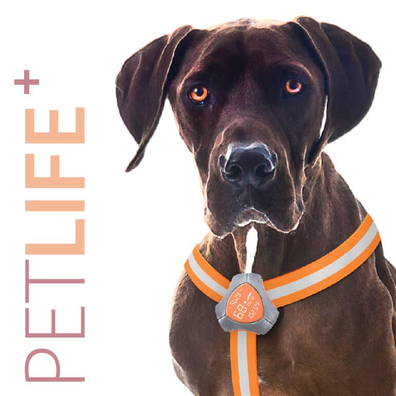 PetLife+